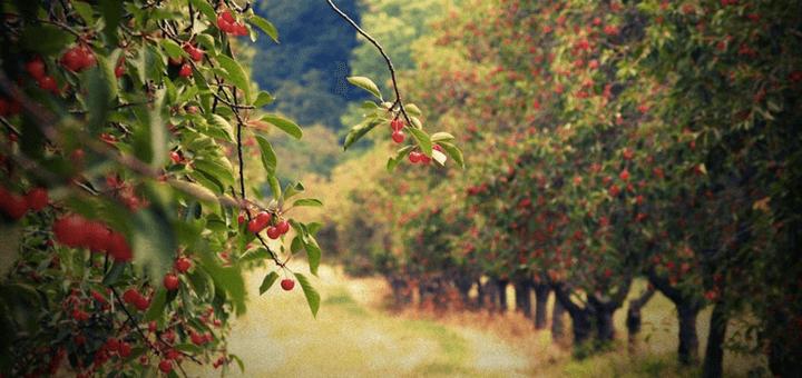 fruktovij-sad