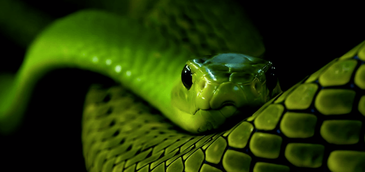 zelenaya-zmeya