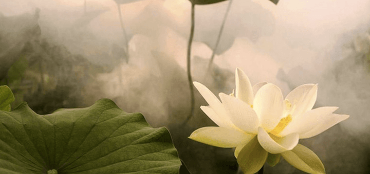 lotos-list