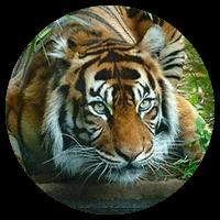 Комплекс упражнений Цигун Игры пяти зверей